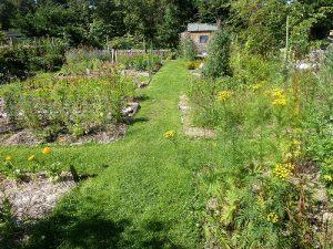 Community garden at Findhorn