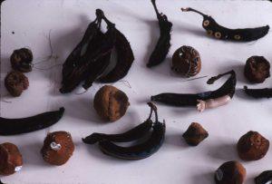 Sewn fruit specimen for Strange Fruit, documented by the artist.